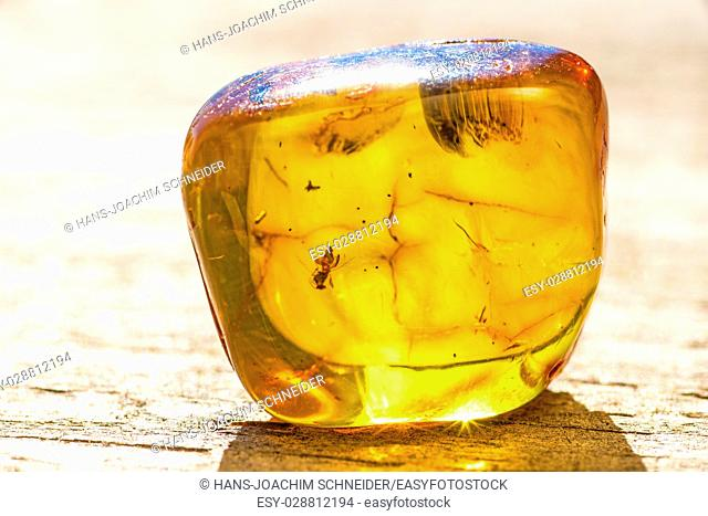 Amber with embedded insect
