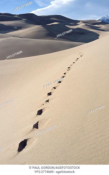 Saguache County, Colorado: Footprints along High Dune at Great Sand Dunes National Park and Preserve. In the distance is Mount Herard in the Sangre de Cristo...