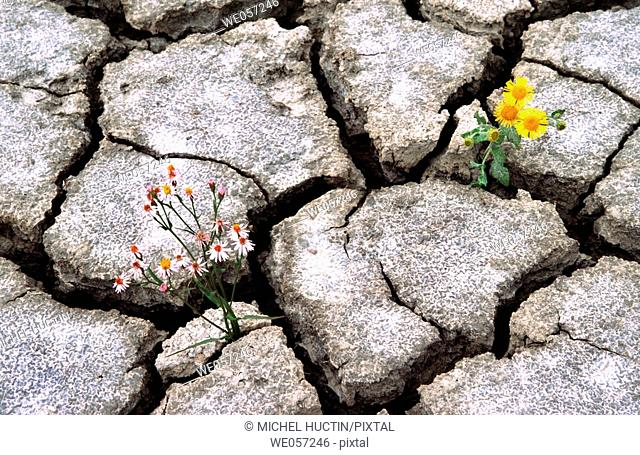 Flowers in dry earth