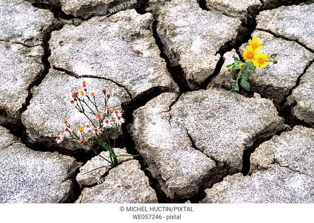 Flowers in dry earth