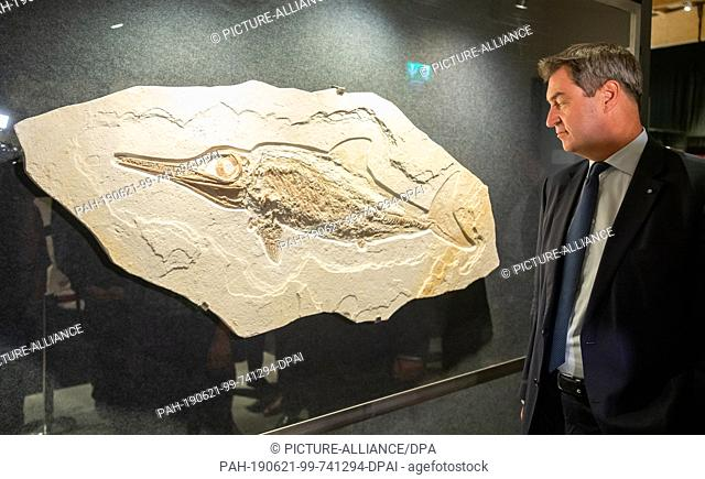 """21 June 2019, Bavaria, Denkendorf: Markus Söder (CSU), Prime Minister of Bavaria, looks at the fossil of the fish dinosaur """"""""Ichthyosaurier"""""""" during the opening..."""