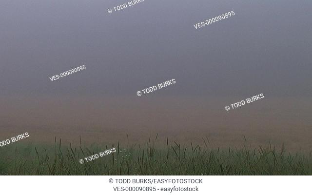 Fog over wheat field time lapse