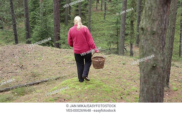 Woman walking and picking wild mushrooms in the forest