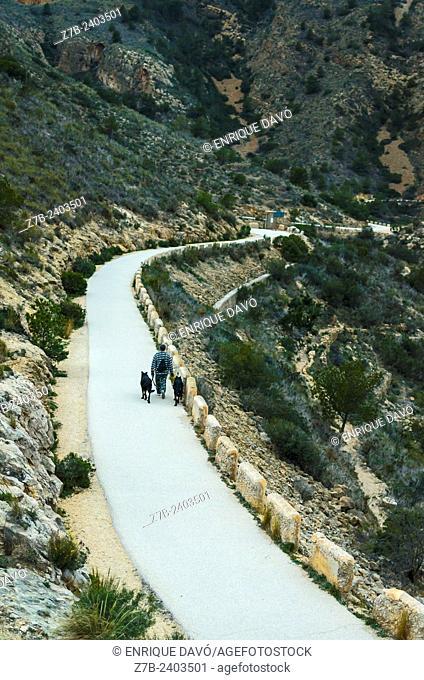 A black dogs in Sierra Helada, Albir zone, Alicante north, Spain