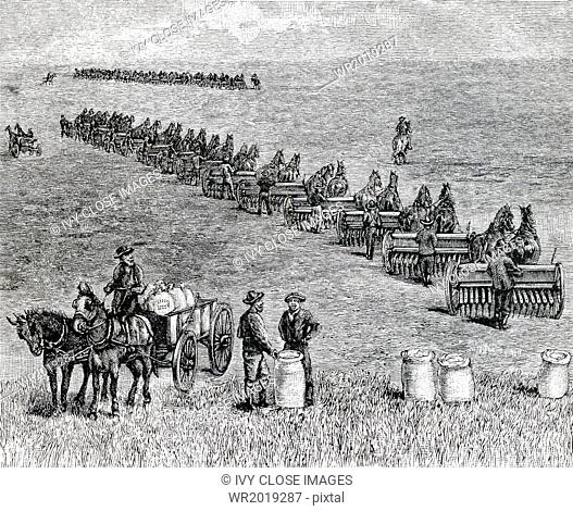 A bonanza farm was the phrase used in the 1870s in the United States to refer to very large farms - those that grew and harvested mostly wheat