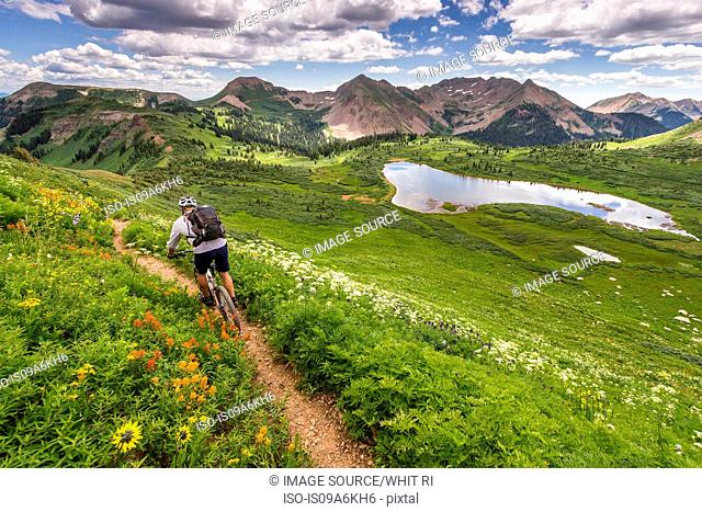 Mountain biker on green trail