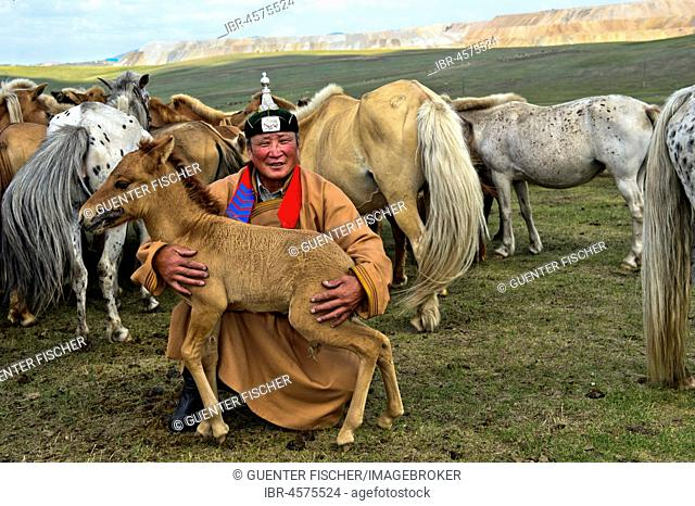 Mongolian man, horse shepherd, in traditional dress with foal and herd of horses, Mongolia