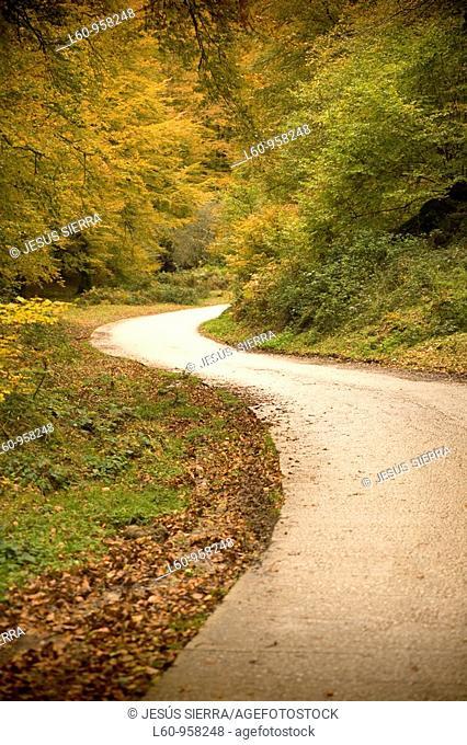 road in florest Itari, Navarre, Spain