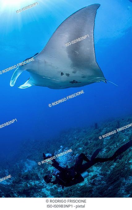 Scuba diver photographing giant manta, Cancun, Mexico