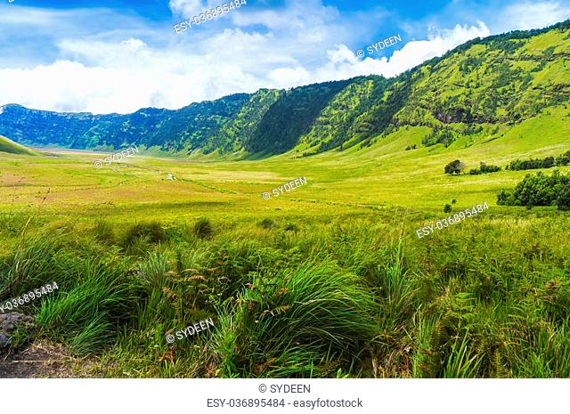 safari grass field at bromo tengger semeru, indonesia