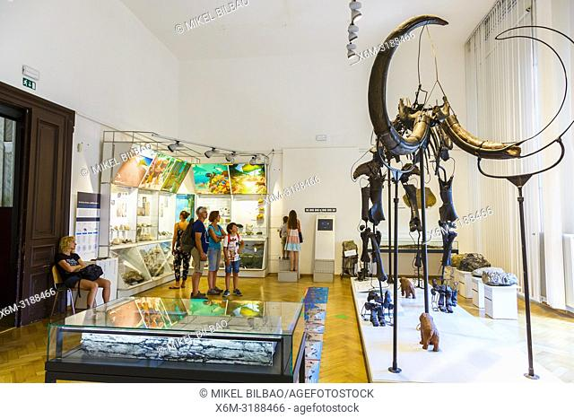 Mammoth skeleton (Mammuthus primigenius). National Museum of Slovenia. Ljubljana. Slovenia, Europe