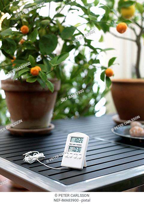 Digital thermometer on table with pot plants