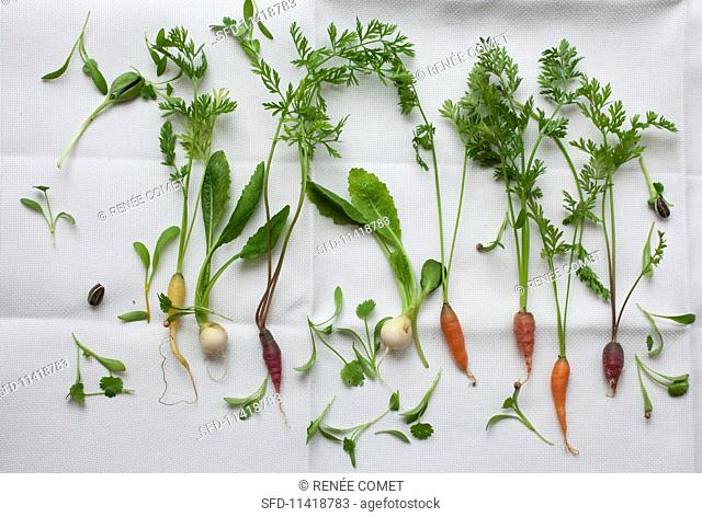 Various young vegetables and herbs
