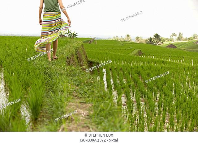 Rear view of woman strolling through rice fields, Gobleg, Bali, Indonesia