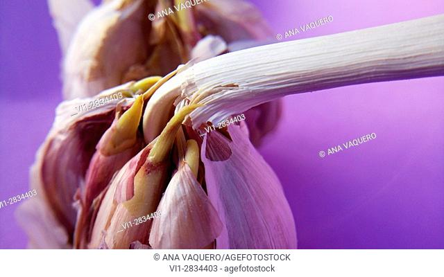 miajadas, Caceres, Extremadura, prospects of garlic