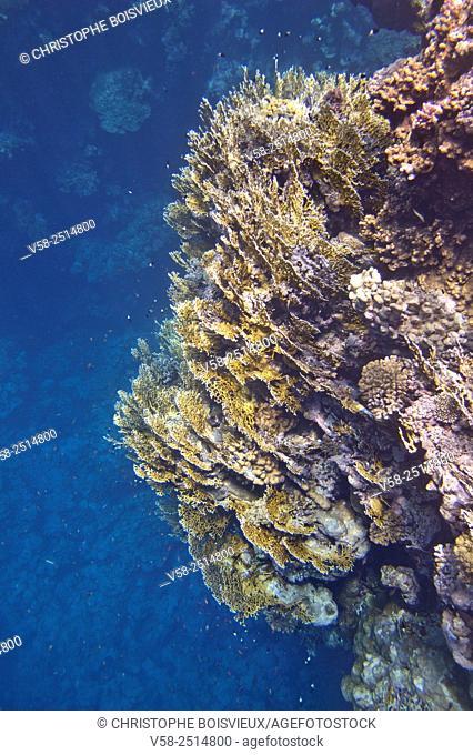Egypt, Marsa Alam region, Red Sea, Coral reef