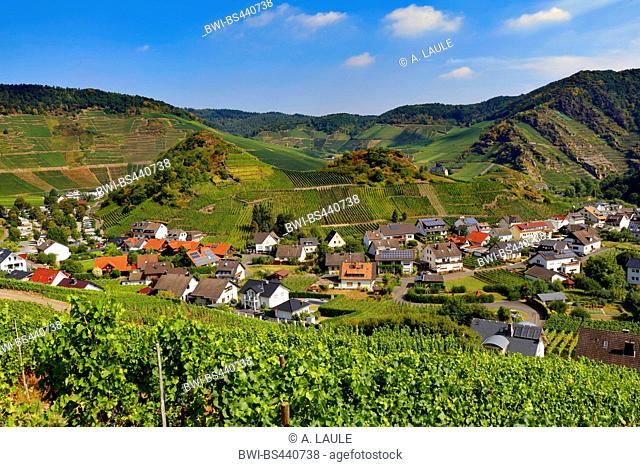 view from the red vine trail onto the town and the vineyards, Germany, Rhineland-Palatinate, Eifel, Mayschoss