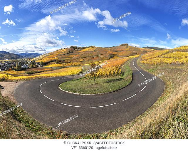 hairpin bend along the Wine Route surrounded by vineyards of the Grand Cru in back ground the medieval village of Turckheim Alsace, France Europe
