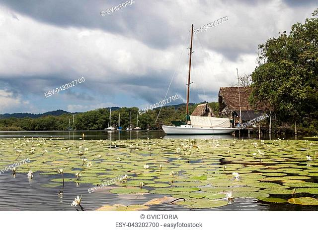Docked sailboats docked along the shore of Rio Dulce, with water lilies and green vegetation in Guatemala, North America