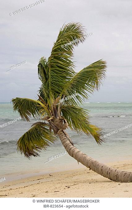 Palm tree on the beach, Nosy Nato Island, Madagascar, Africa