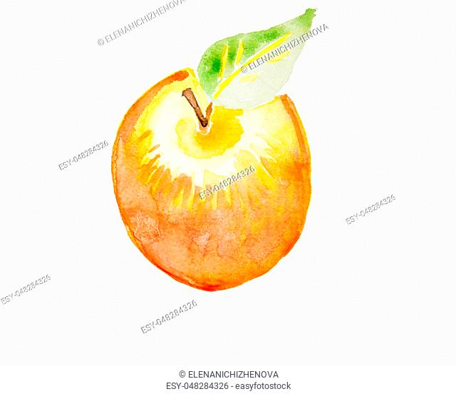 A watercolor illustration of a nice apple