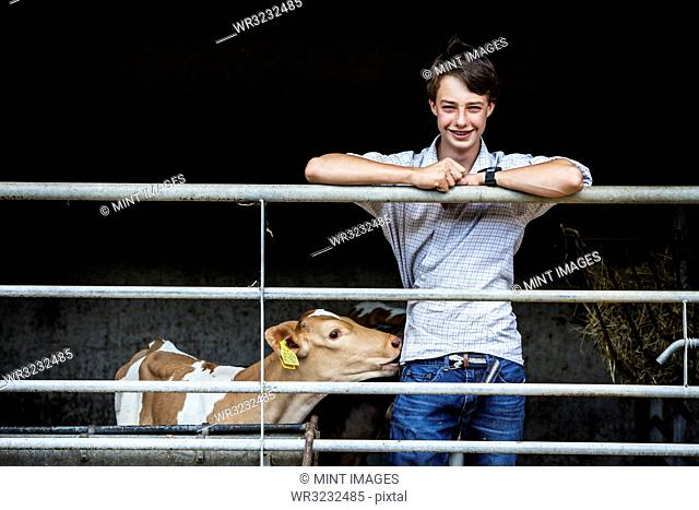 Young man standing in a barn with a Guernsey calf, smiling at camera