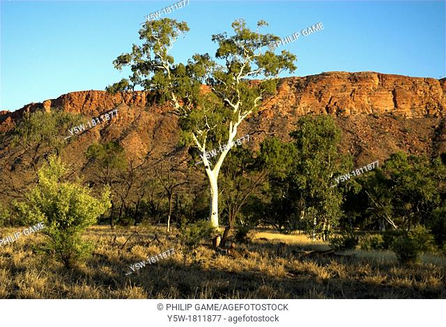 Ghost gum in late afternoon, West MacDonnell Ranges, Central Australia