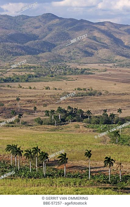 view of the valley with Royal palms and sugarcane fields from the viewpoint of the Loma del Puerto, with the Sierra del Escambaray in the background