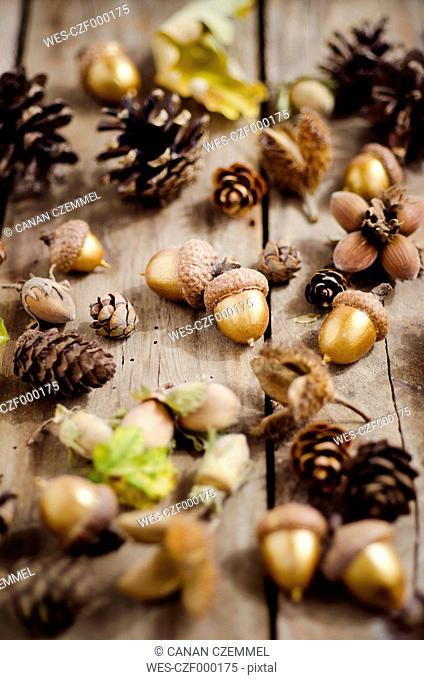 Autumnal decoration on wood