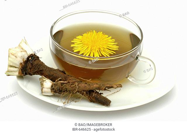 Dandelion (Taraxacum), herbal tea, medicinal tea