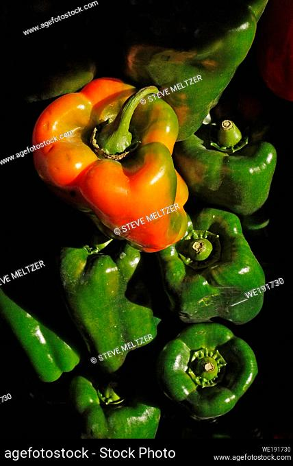 As Green peppers ripen they turn into red