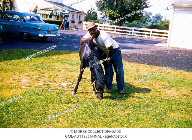 Portrait of an African American man posing with a young black bridled horse in a grassy yard, June, 1959. A blue car is parked in the driveway behind him