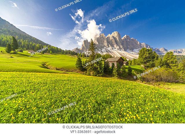 Wood huts in the green meadows of Malga Caseril (Kaserillalm), Puez Odle, Dolomites, Funes, Bolzano province, South Tyrol, Italy