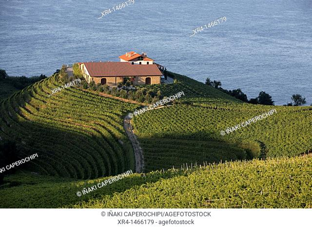 Vineyards of txakoli, Getaria, Guipuzcoa, Basque Country, Spain