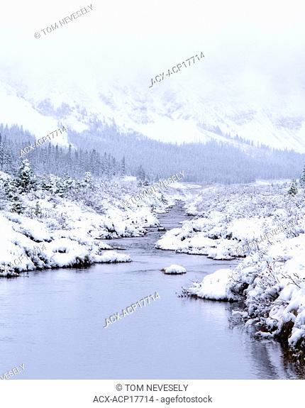 Snowy landscape, Wilcox Creek, Jasper National Park, Alberta, Canada