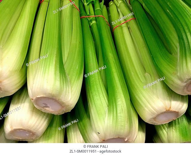 Farm fresh organic Celery