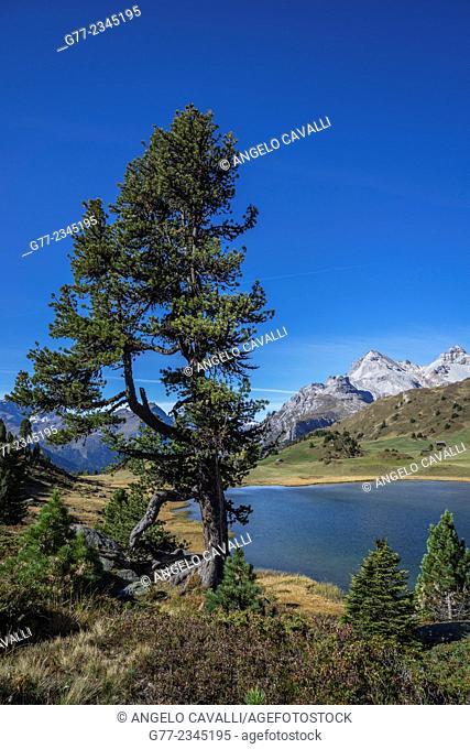 Lai da Vons alpine lake, Canton of Graubünden, Switzerland