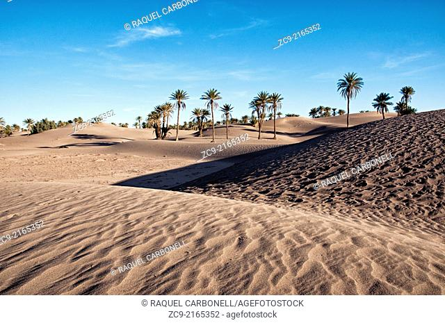Oasis and palm grove, M'Hamid, Draa Valley, Morocco