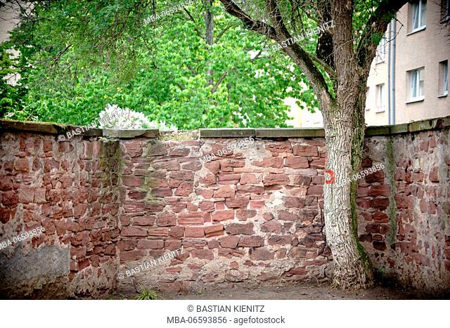 A broad-leaved tree in a corner of a parking bay separated by a rustic wall