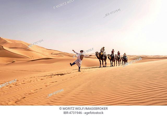 Tourists with Bedouin guide, caravan with two Dromedary (Camelus dromedarius), sand dunes in the desert, Erg Chebbi, Merzouga, Sahara, Morocco