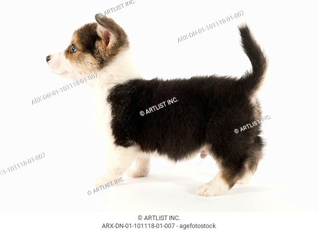 A puppy in profile