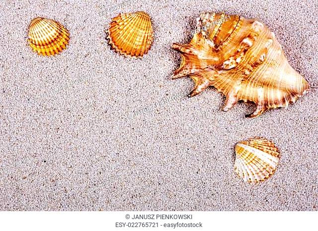 Seashells on the sand, a background