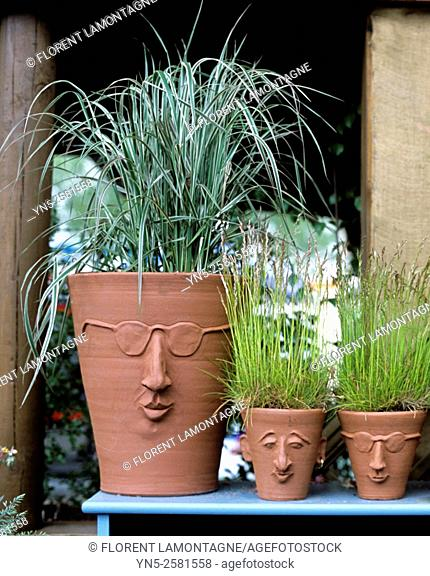Ambiance of grass plants in pot with funny faces