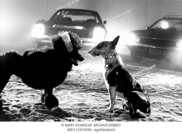 Poodle Sparky Characters Sparky Film Frankenweenie 1984 Director Tim Burton 01 December Stock Photo Picture And Rights Managed Image Pic Mev 12474396 Agefotostock