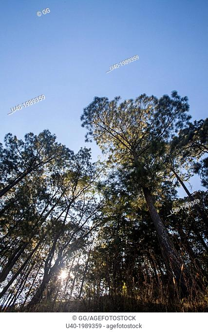 Trees in the sunlight, Comalapa, Guatemala