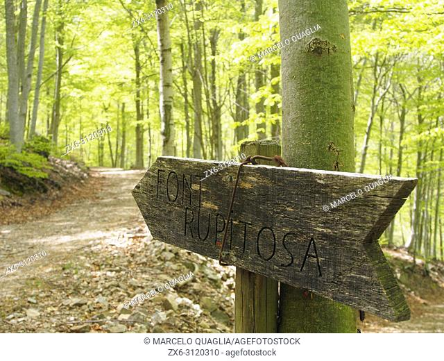 Wooden sign of Font Rupitosa fountain, Matagalls peak surroundings. spring time beech forest (Fagus sylvatica) at Viladrau village countryside