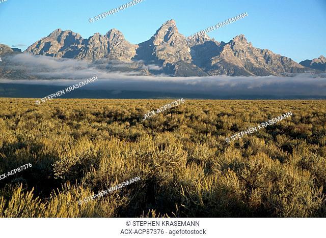 Field of Big Sagebrush growing in Grand Teton National Park, Jackson, Wyoming, North America. (Artemisia tridentata); Teton Mountain Range in distance