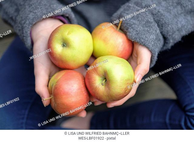 Hands holding four apples, close-up