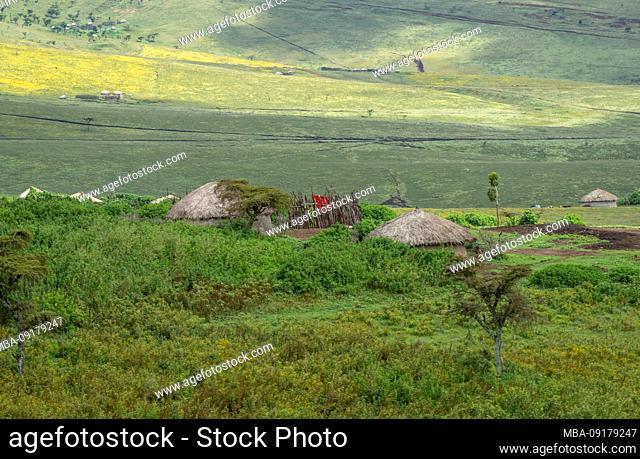 A foot, tent and jeep safari through northern Tanzania at the end of the rainy season in May. National Parks Serengeti, Ngorongoro Crater, Tarangire