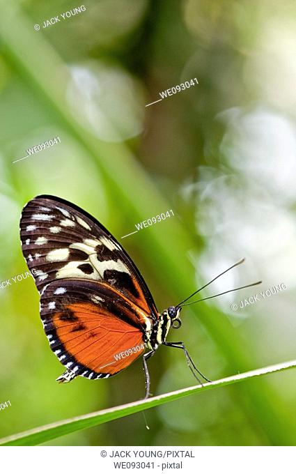 A close up view of a beautiful butterfly resting on a leaf